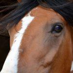 9 Signalen van een gespannen paard