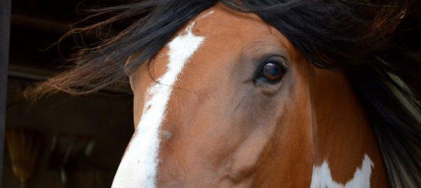 gespannen paard signalen, spanning paard, stress paard