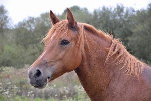 gespannen paard, spanning paard, stress paard