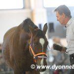 """Chris Irwin: """"Verandering in de paardenwereld begint in Nederland."""""""