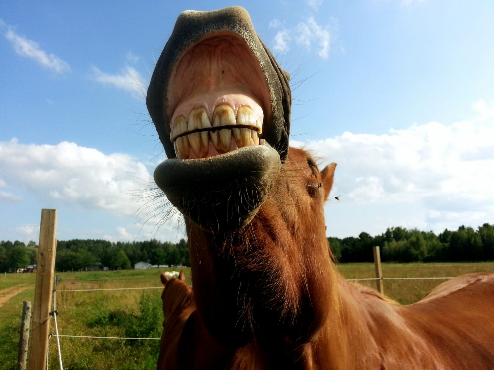 Help, mijn paard heeft (g)een mening