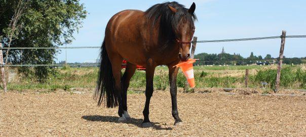 zelfverzekerd paard, stoer paard, rianne dekker