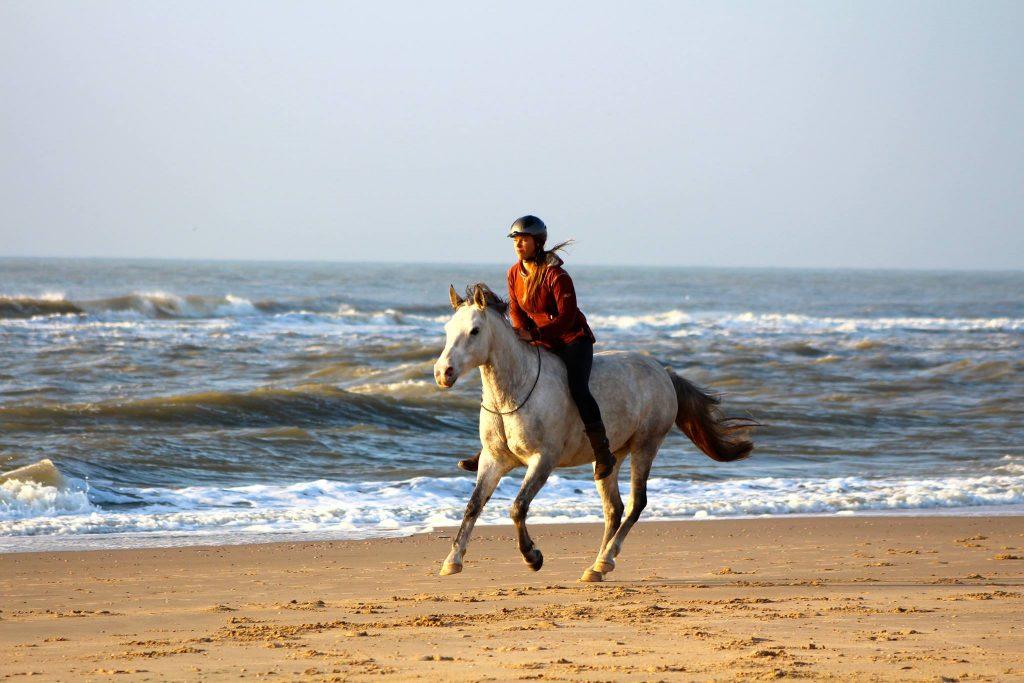 nicky en najib, parelli, strandrit, paardrijden zonder hoofdstel