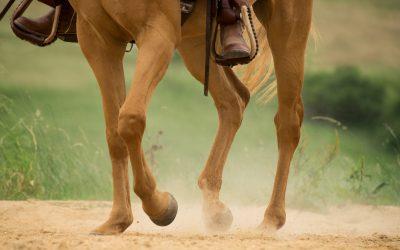 Artrose bij paarden: Voorkomen, management en behandeling