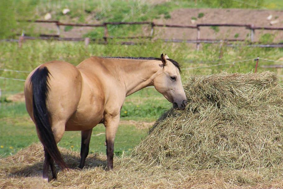 onbeperkt hooi paard