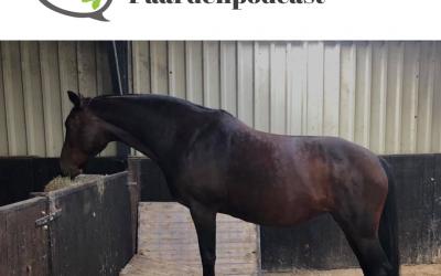#31 Paarden trainen zichzelf met passive physio – Tamara Dorresteijn