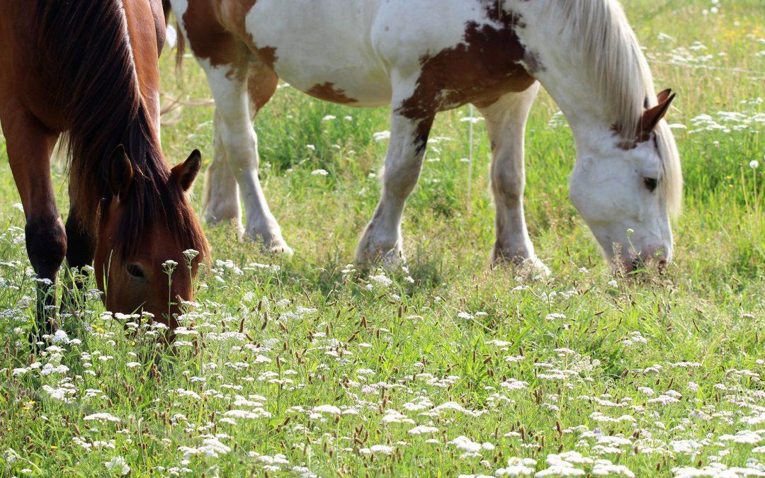 Mijn paard is te dik, hoe laat ik hem afvallen?