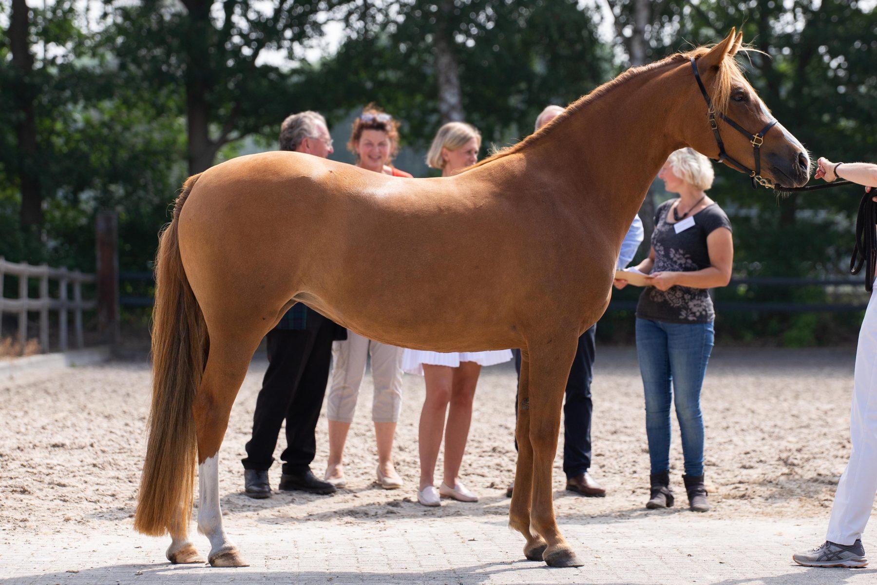 paard beoordelen