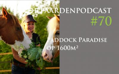 #70 Paddock Paradise op postzegelformaat – Femke Dölle