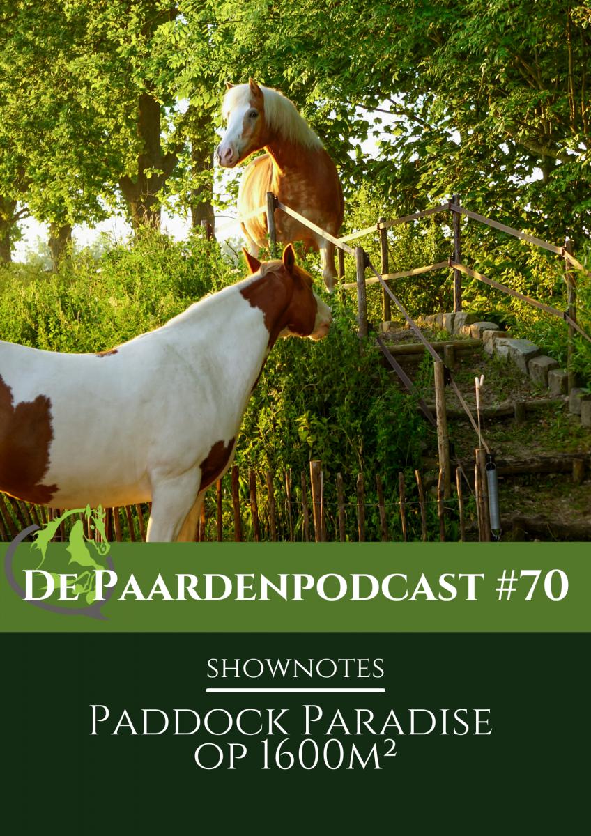 shownotes podcast #80, femke dolle