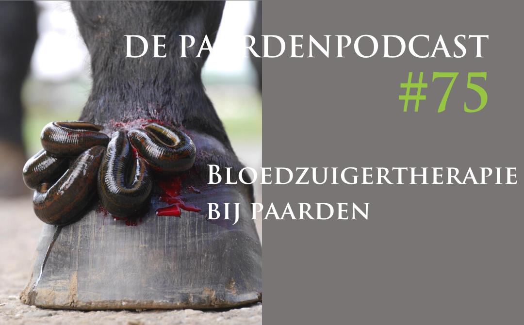 #75 Bloedzuigertherapie bij paarden – Stephanie Stammes