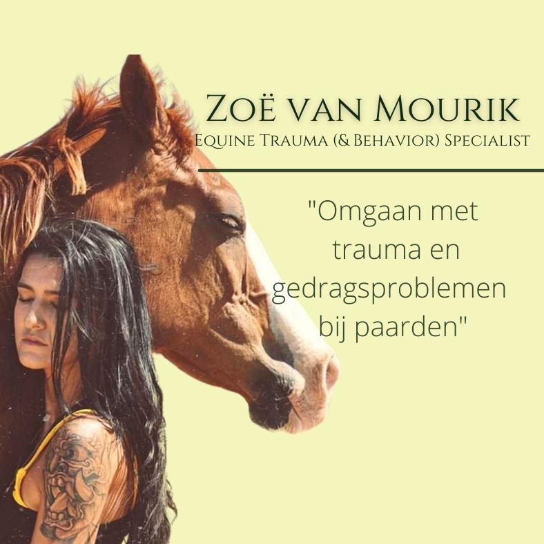 Zoe van Mourik, paardentraining seminar
