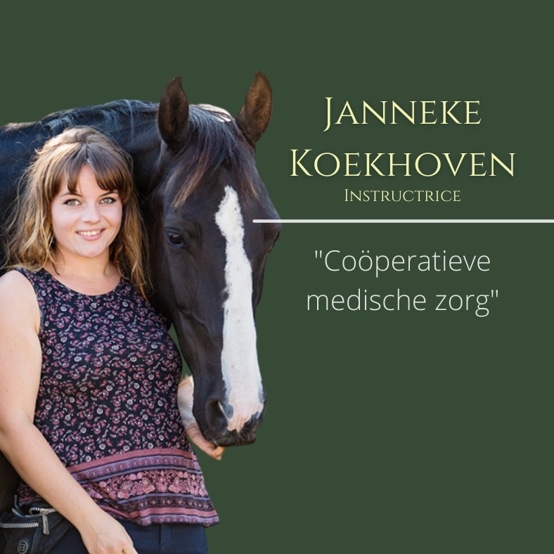 janneke koekhoven, paardentraining